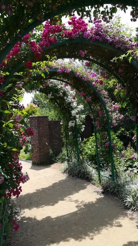 花菜ガーデン バラのアーチ